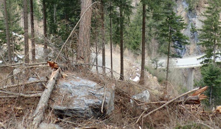 Sturzblock aufgehalten von einem Baum oberhalb der Transertobelbrücke